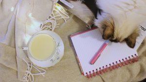 Birman cat playing with pen